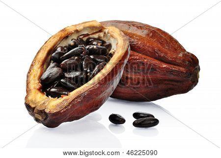 Fresh Cacao Fruit