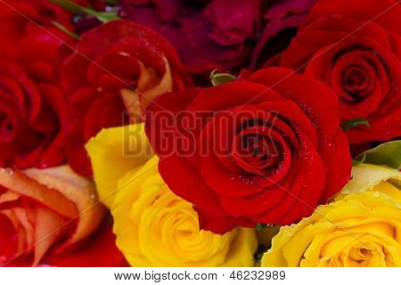bouquet of roses close up