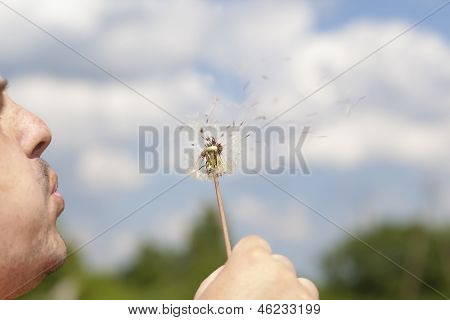 Man blowing dandelion for dispersing seed