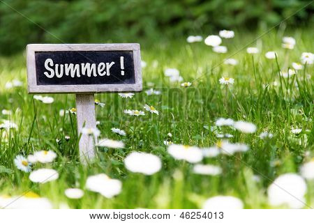 Summer Signboard In The Meadow