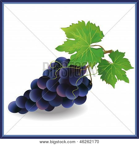 Realistic Black Grape With Green Leaves