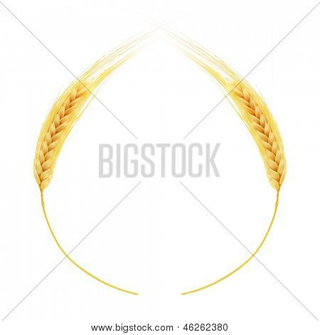 Ears of wheat border isolated on white background