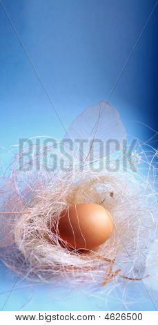 Background With A Nest And Egg, Light