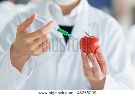 Scientist injecting a tomato with green liquid in laboratory