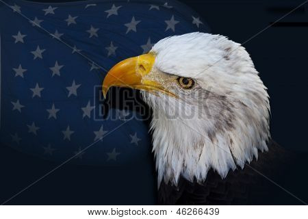 Bald Eagle Before Flag Of Stars
