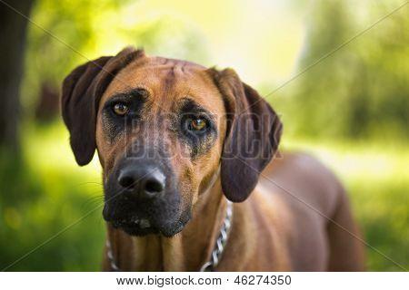 Retrato de jovem cão jogando no Prado