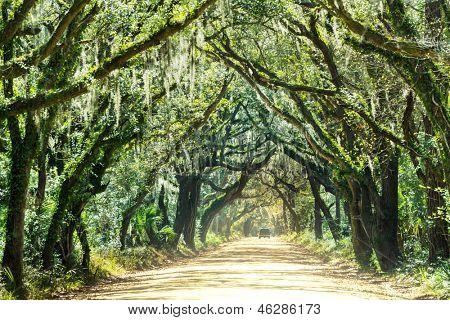 Trees tunnel -Botany Bay,South Carolina
