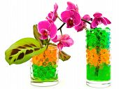 Orchid And Plants In Glass With Hydrogel poster