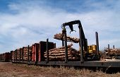 picture of freightliner  - Crane loading cut logs on a railcar - JPG