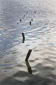 Pilings From An Old Pier