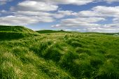 stock photo of dune grass  - tall green grass on the dunes of Ballybunion golf course in county Kerry Ireland - JPG