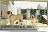 image of daycare  - Large and small dogs in a pet boarding facility - JPG