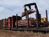 stock photo of freightliner  - Crane loading cut logs on a railcar - JPG