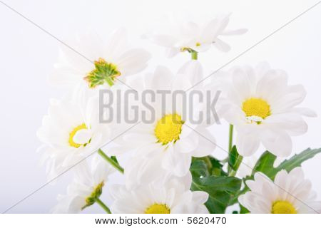 Beautiful Flowers On White Background