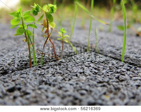 Weed growing out of concrete ground