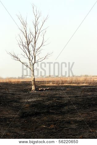 landscape with dry tree in burnt steppe