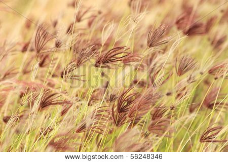 Grass in the wind