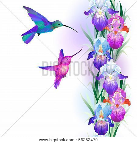 Seamless pattern with Iris and hummingbirds