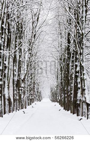 verschneiten park