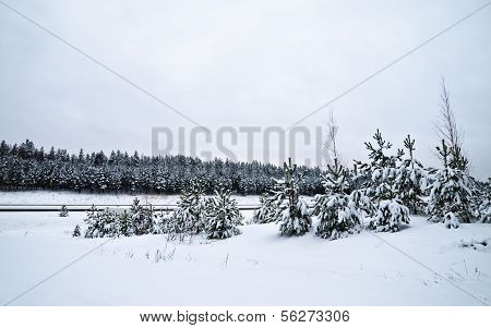 Winter Landscape In The Forest Snowbound