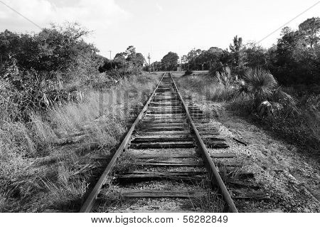 Black And White Railroad Tracks In Florida