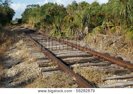 Railroad Tracks In Florida Wilderness
