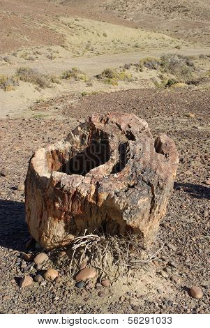 Petrified forest in Patagonia