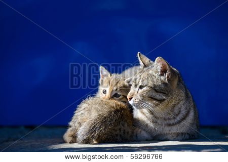 Mother cat and its kitten