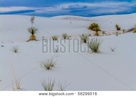 Beautiful and Surreal White Sands of New Mexico Desert