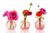 Row colorful butter cups in pink and orange in glass vases isolated over white background