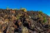image of valley fire  - An Interesting Wall of Lava Flow Stone with Cactus in the Valley of Fire Lava Field in New Mexico with Interesting Flow Stone Lava Rocks and Other Desert Plants - JPG