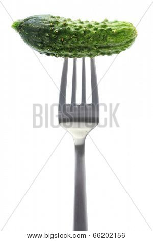 gherkin, garden fresh cucumber on fork