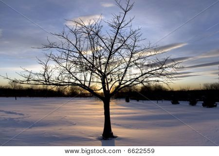 Isolated tree in Snow