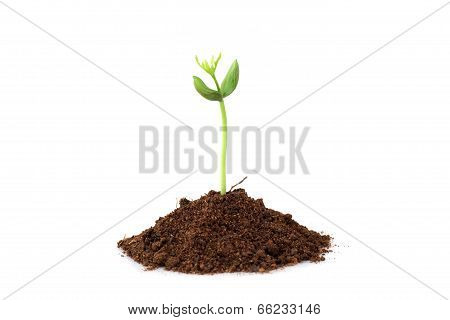Baby Plant Isolated On White