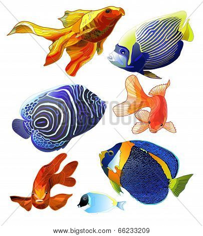 Set of Exotic Colorful Fish.