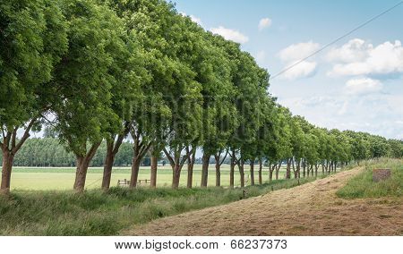 Row Of Trees In A Rural Landscape