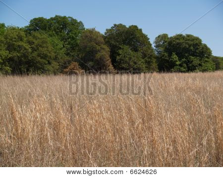 Tallgrass Meadow