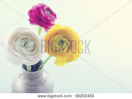 Colorful Ranunculus Flowers4
