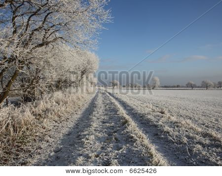 White Frosted Landscape