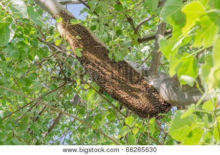 Honeycomb On Tree
