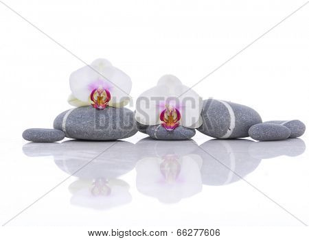 Gray stones with beautiful two orchid