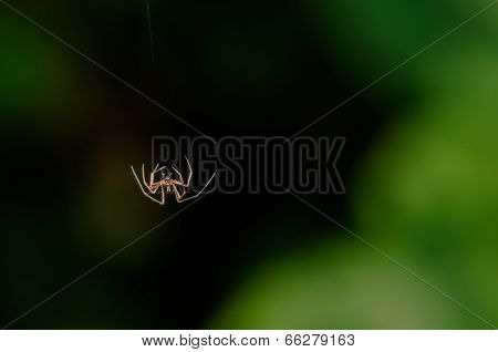 Single Small spider jumping falling mid-air