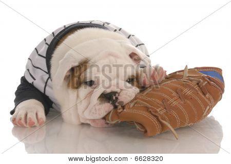Bulldog Puppy Chewing On Ball Glove