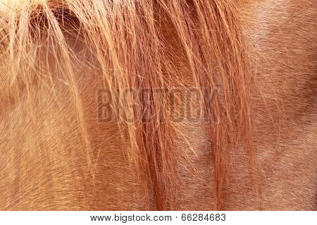 Brown Horsehair With Background Texture