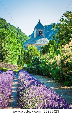 Lavender In Front Of The Abbaye De Senanque In Provence