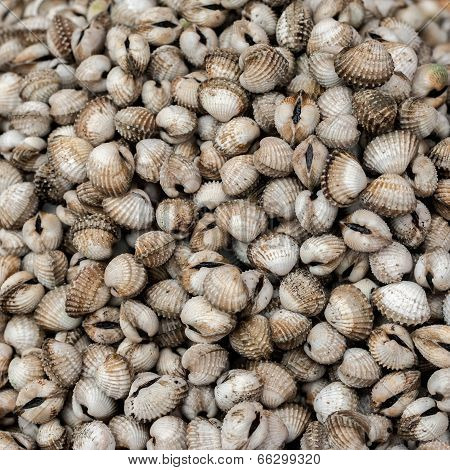 Fresh Cockles ( Clams ) For Sale At Asian Seafood Market