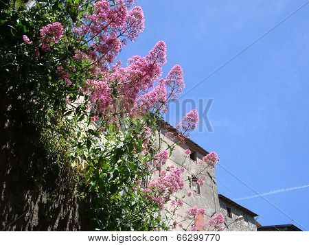 glimpse of village with stone walls and flowery corner typical Italian village