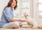 stock photo of obey  - Little dog maltese sitting with his owner on the sofa in home and giving a paw - JPG