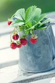 picture of hazy  - Small red wild strawberries with green leaves in a metal cup on a white wooden table with hazy vintage editing - JPG