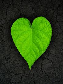 stock photo of heart shape  - heart shaped leaf on cracked soil background - JPG